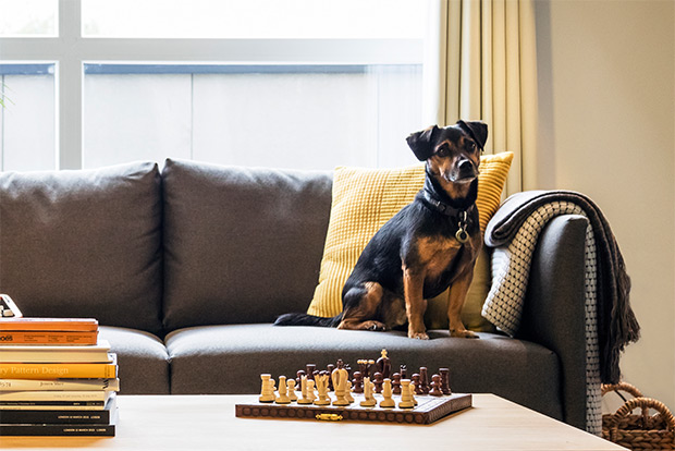 We are pet-friendly at be:here Hayes. All apartments have outdoor space, and some even have their own private gardens - the perfect place to exercise a four-legged friend.